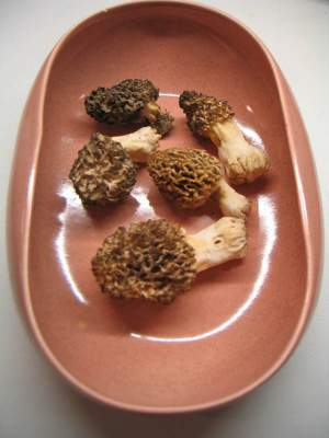 Barrow morrels in a Russel Wright bowl