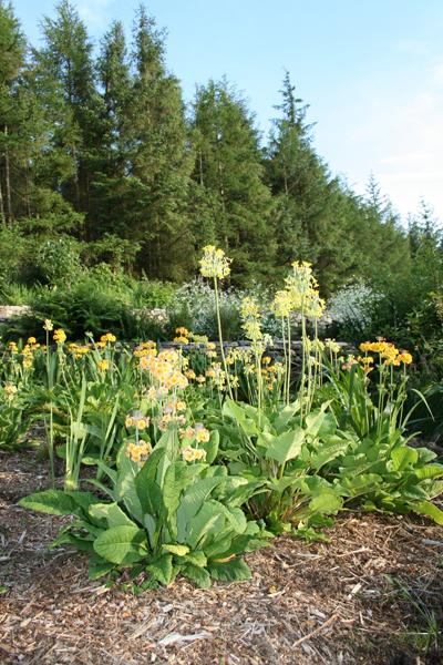 Bog Garden, July 2008