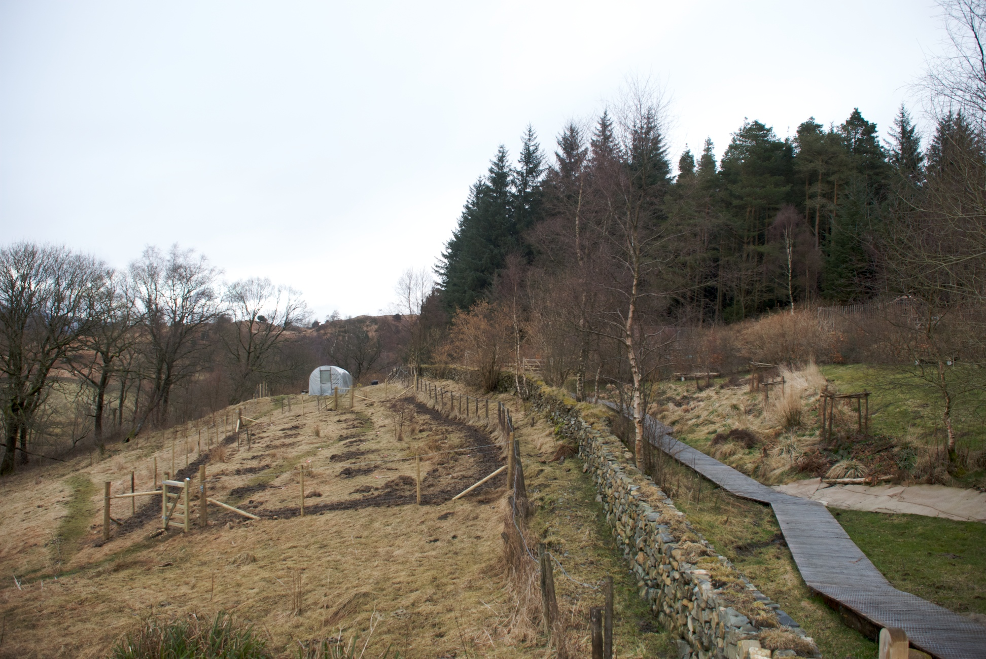 Looking east from the farmhouse, new 'orchard' on left