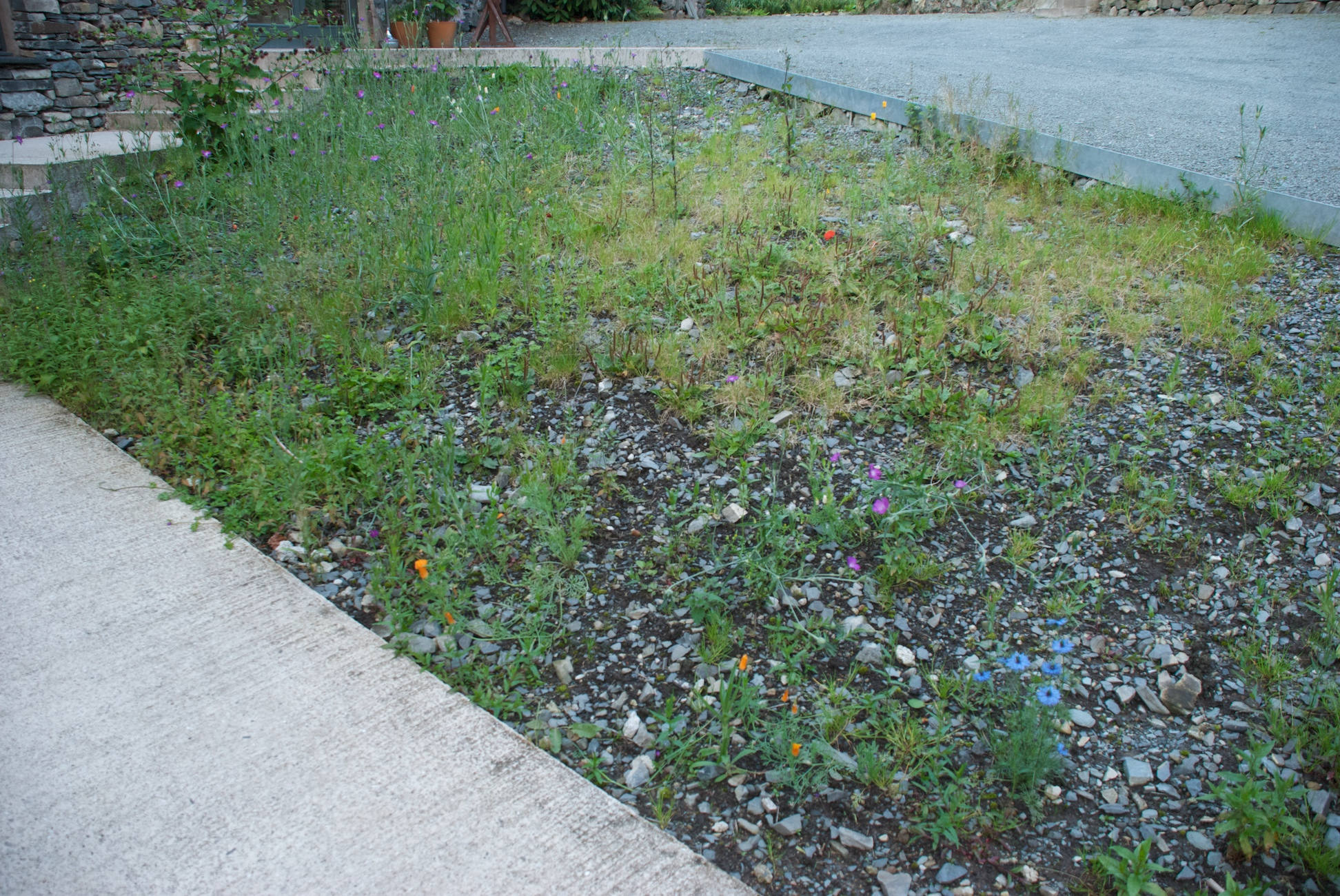 This year's disasterous annuals from Pictorial Meadows :-(