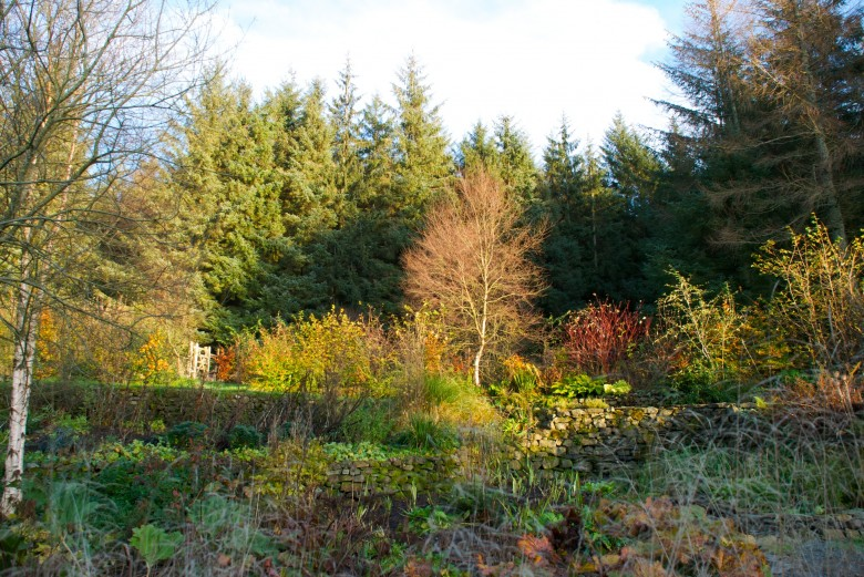 A north-east wards view of the bog and upper Farmhouse Garden, Nov. 2011