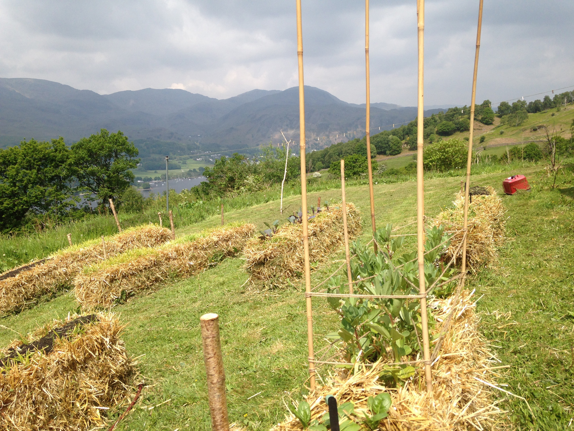 Strawbale veg garden in mid-May